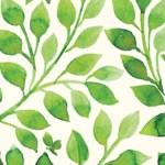 Dayzen Bigornia-Monize